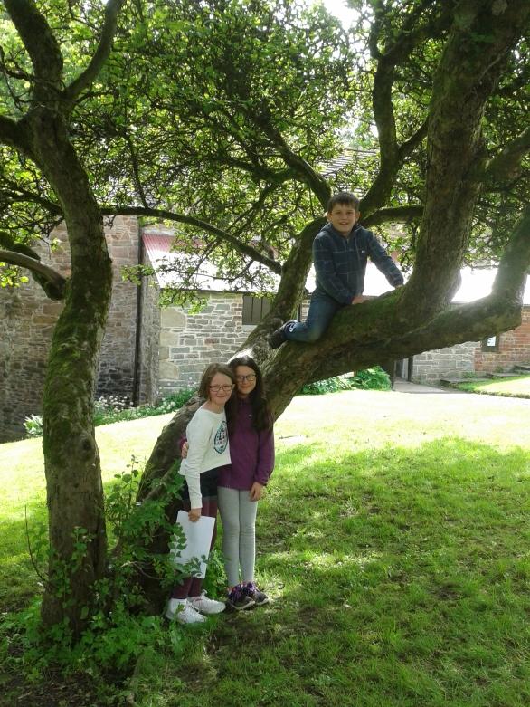 get creative workshop kids up tree
